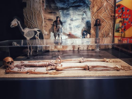 Sala dell'Uomo al Museo Gemmellaro